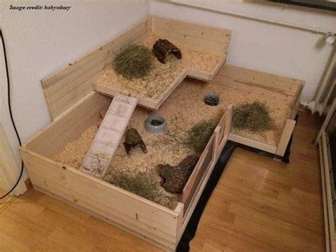 guinea pig cage options  choose  sff
