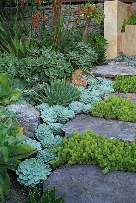 landscaping succulents landscaping with succulents the lovely plants