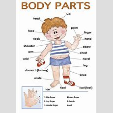 17 Best Ideas About Body Parts On Pinterest  Speak In English, Body Name And English Time