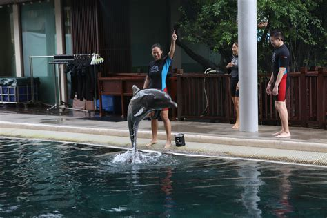 I Spent A Day Training Dolphins. It Was Fun