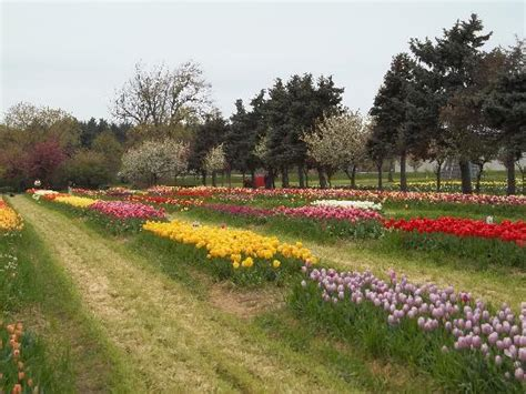 Veldheer Tulip Garden by Veldheer Tulip Garden 2018 All You Need To