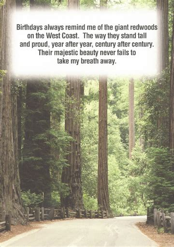 giant redwood trees birthday card  recycled paper