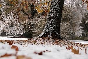 Wann Fällt Der Erste Schnee : der erste schnee katharazzi photographykatharazzi ~ Lizthompson.info Haus und Dekorationen