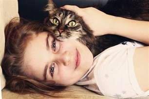 how to certify a therapy cat how to get your cat certified as a therapy cat catster