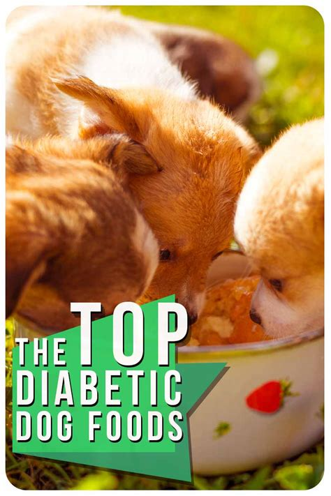 Pet parents looking for the best dog food for dogs with diabetes and wanting to fix this issue may want to sometimes, dogs with diabetes will also have other concurrent conditions which need to be taken into account when considering their diet. Diabetic Dog Food - What's the Best Choice for Your Pet?