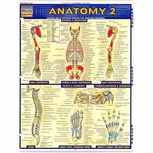 Quickstudy Bar Chart  Anatomy 2
