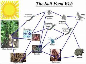 Food Web For Australian Grasslands