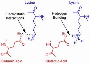 Amino Acid Study Guide  Structure And Function