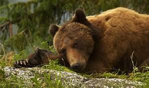 Bear Watching At Knight Inlet Lodge Holiday