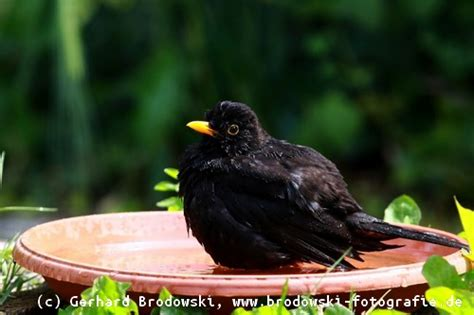 zugvoegel zugvogelarten herbst winter zugvogel routen