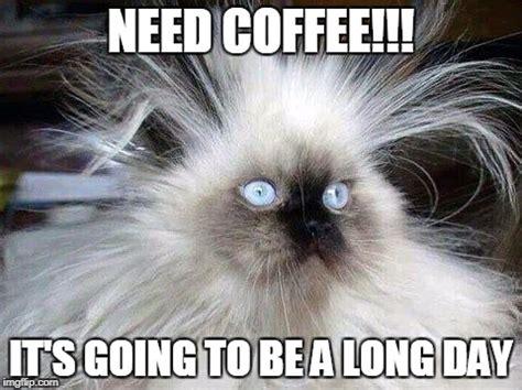 Need Coffee Meme - crazy hair cat imgflip