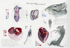 Idle Thumbs  Squirrel Study Sheet