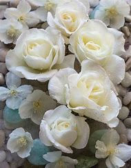 best 25 ideas about white roses find what you ll love