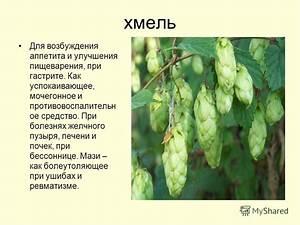 Травы мочегонные средства при гипертонии