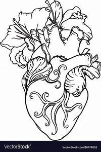 Drawing Human Heart