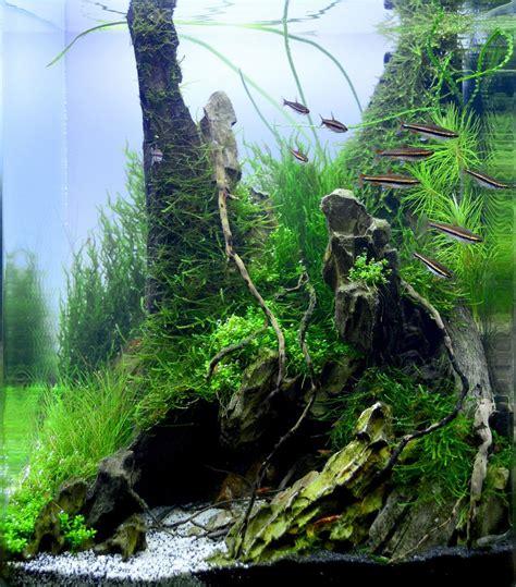 aquascaping freshwater aquarium quot back in the quot 30l aliaksei kirhizau babruysk