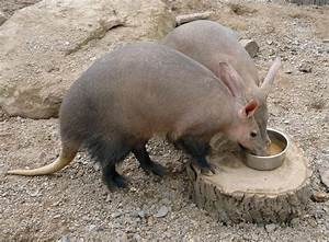 aardvark | only fruit eaten by a ardvarks is the aardvark ...