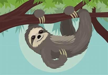 Sloth Vector Illustration Clipart Vectors Graphics