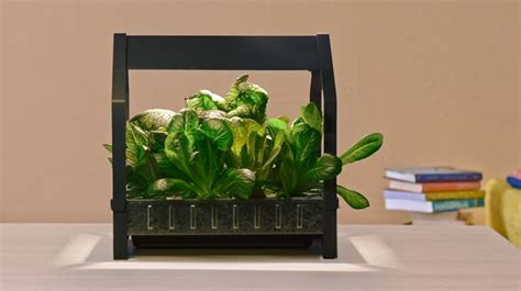 ikea brings hydroponics to the mainstream with indoor