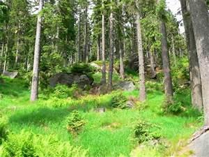 Bilder Vom Wald : wandern dreisessel berg bayerischer wald dreisesselberg dreisesselfelsen ~ Yasmunasinghe.com Haus und Dekorationen