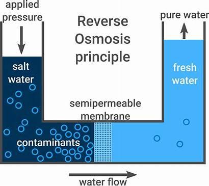Osmosis Reverse Principle Salt Solution Igem Aachen