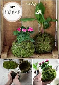 Kokedama Selber Machen : die besten 25 h ngende pflanzen ideen auf pinterest pflanzenhalter diy h ngepflanzen und ~ Orissabook.com Haus und Dekorationen