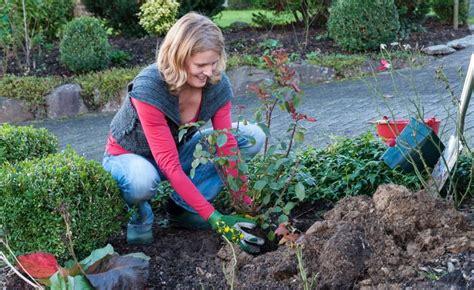 beste zeit zum tomaten pflanzen beetrosen im herbst pflanzen blumenbeet bl 252 tenstr 228 ucher und rosengarten