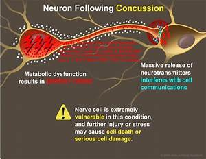 Energy Crisis  And Neurotransmitter Release Results In