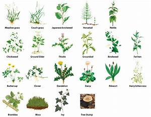 Different Types Of Weed Plants