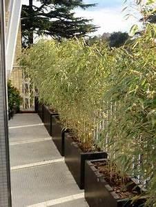 brise vue bambou et cloture pour plus dintimite dans le With brise vue avec jardiniere 11 plantes de jardin le bambou fascinant et polyvalent