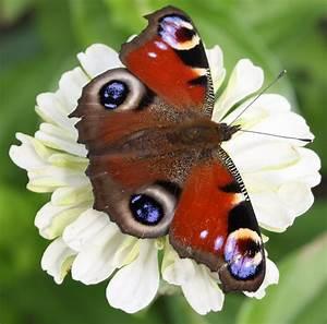 Schmetterling Am Kinderbett : wei e blume mit schmetterling foto bild natur kreativ ~ Lizthompson.info Haus und Dekorationen