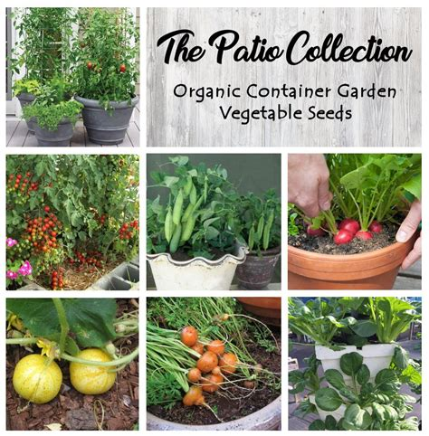 Organic Patio Container Vegetable Seed Collection 6