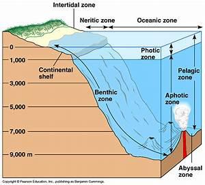 Ocean Zones Diagram