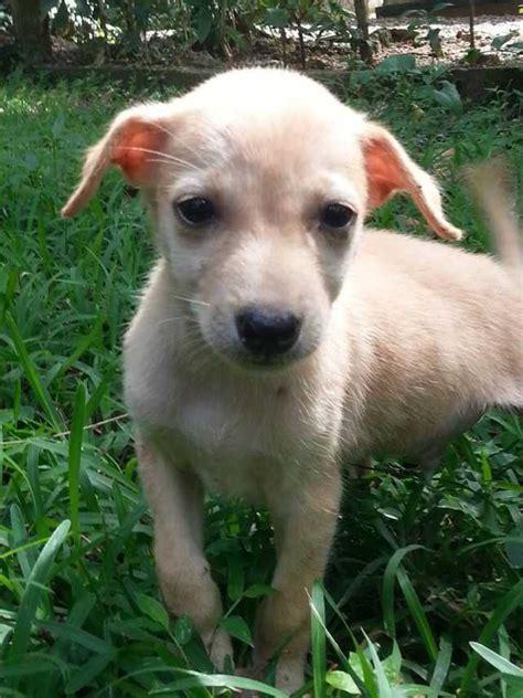 Find A Loyal Best Friend In Sri Lanka  Ee  Adopt Ee    Ee  A Dog Ee