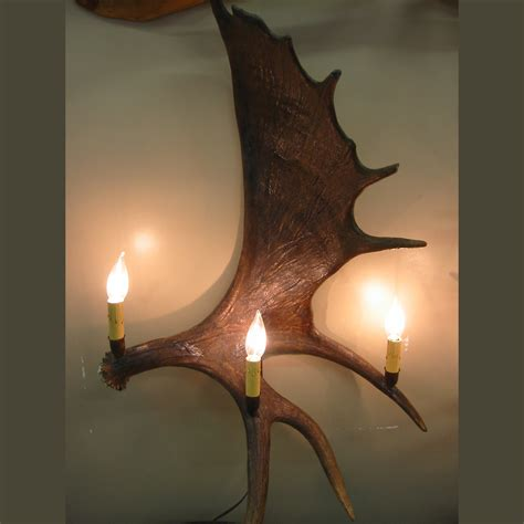 real moose antler sconce