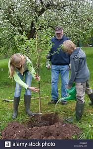 Wann Apfelbaum Pflanzen : apple fruit tree tree plant planting apfelbaum ~ Lizthompson.info Haus und Dekorationen