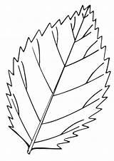Leaf Coloring Elm Parentune Worksheets Assignment Child sketch template
