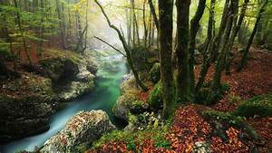 River, Between, Algae, Covered, Rock, And, Treen, Trunk, In, Forest