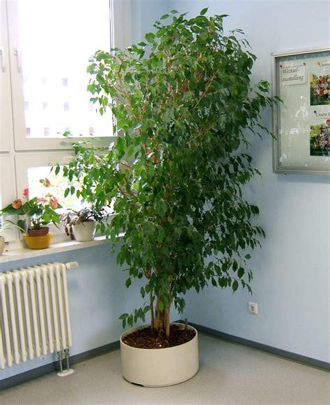 Große Grünpflanzen