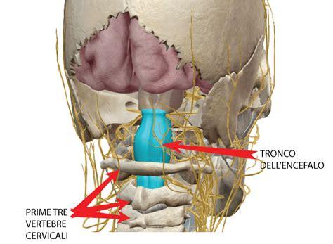 Artrosi Mal Di Testa Mal Di Testa Digestivo E Nervo Vago Problemi