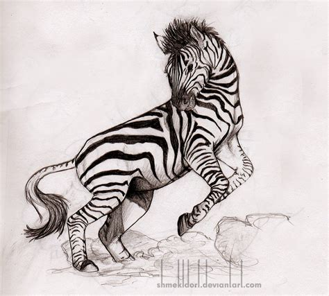 Zebra Sketch By Shmekldorf On Deviantart