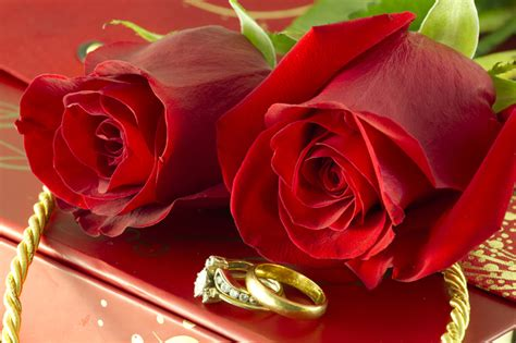 roses and wedding rings gift box photober free photos free images for all