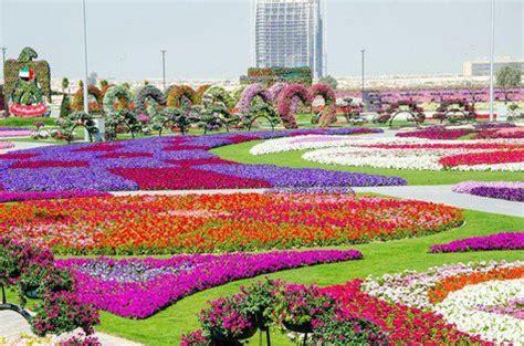dubai miracle garden taman bunga terbesar dan terindah di