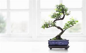 Growing Cannabis Bonsai Trees  Separating Fact From