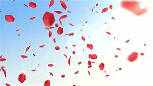 Petals Of Red Roses Fall On Clear Sky Background With Sun ...