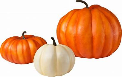 Pumpkin Transparent Pumpkins Clipart Tubes Zucchini Legumes