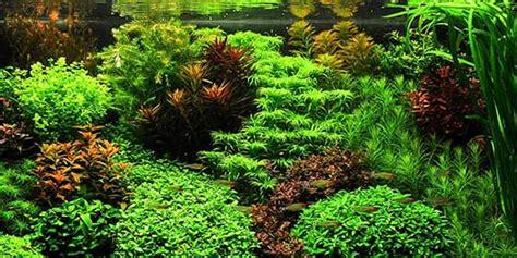 guide to aquascaping a guide to aquascaping and aquarium design