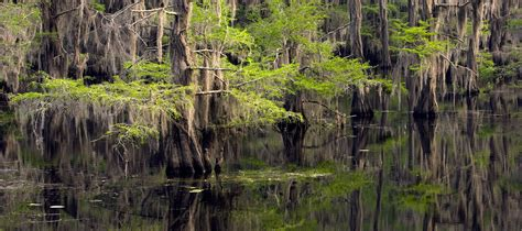 Caddo Lake State Park — Texas Parks & Wildlife Department
