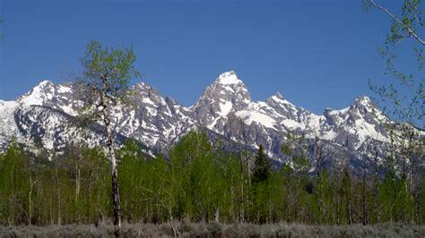Parco Nazionale Grand Teton / Pioppo tremulo / Wyoming ...