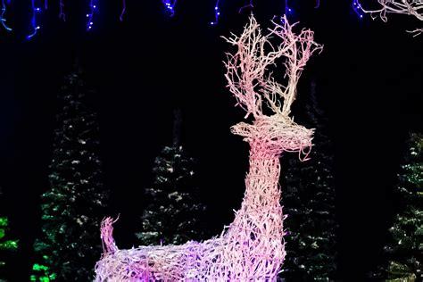 the christmas light company light up southton the history of christmas lights